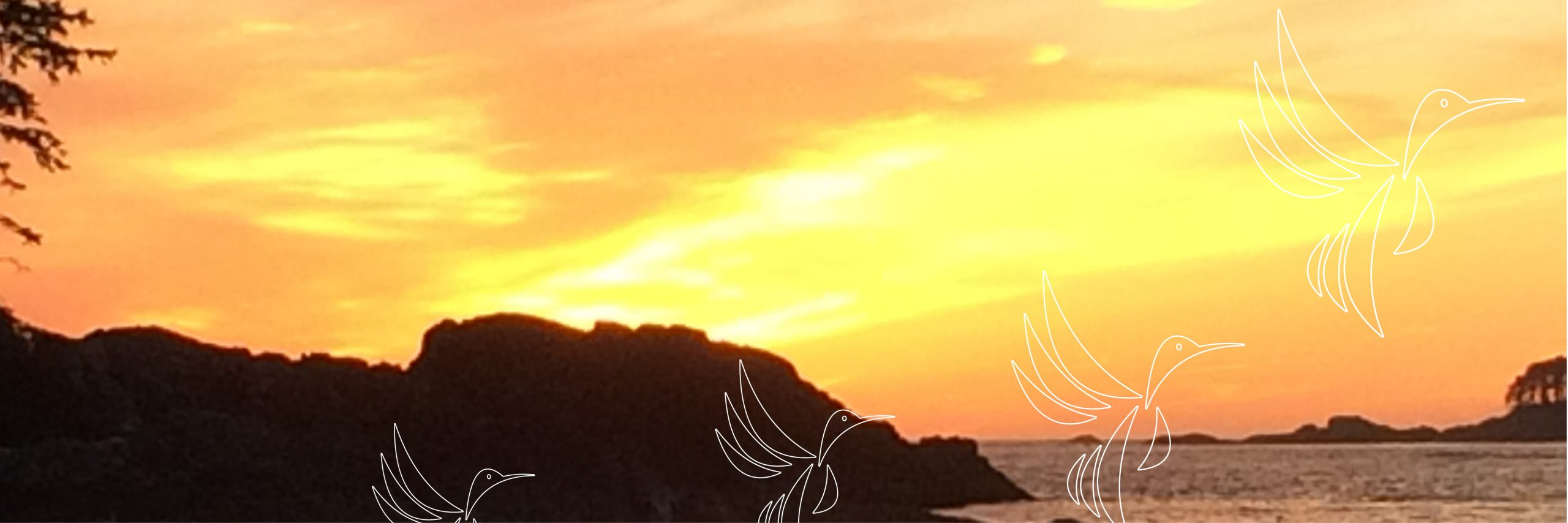 Birds taking flight - sunset sky over water